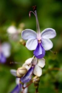 Flower by Martin Chen