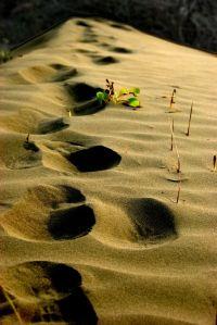 Sand by Martin Chen