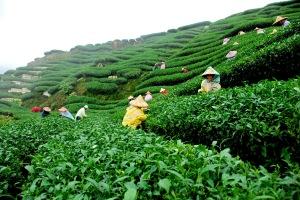 The Tea Garden by Martin Chen