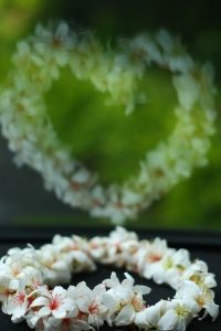 Hakka Tung Blossom by Martin Chen